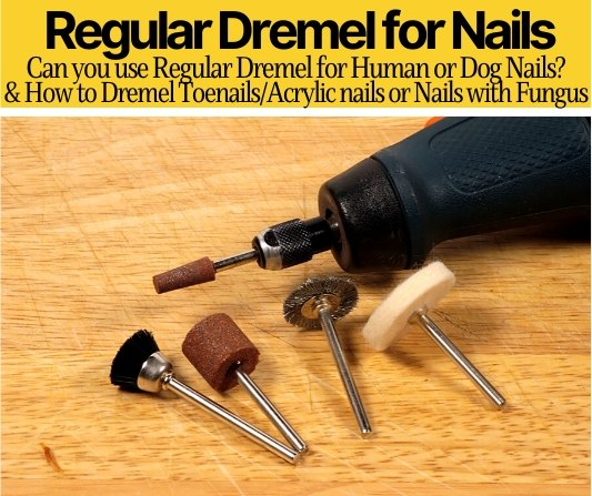 Can I Use a Regular Dremel for Nails (Human & Dog Nails)